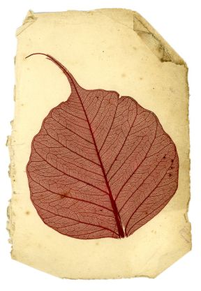 A picture of a leaf